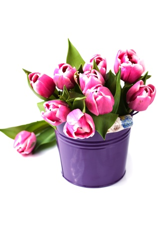 Group of fresh pink tulips in a bucket on a white background with copy space Stock Photo - 13319184