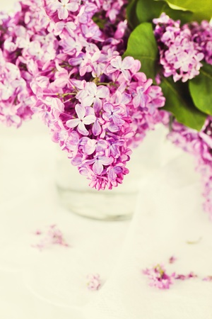 Fresh blossom lilac in a vase Stock Photo - 13519253