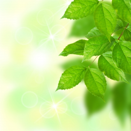 Green leaves with blurred background and bokeh