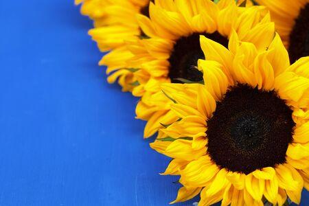 Sunflower decorative flower on a blue background photo