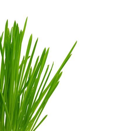 Bush of green grass isolated, over white background with copy space Stock Photo - 17969816