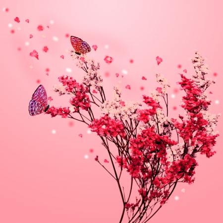 Beautiful blossom tree with pink flowers, petals fall and butterfly