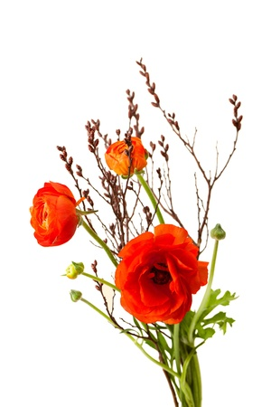 bouquet of red ranunculus over white background with copy space  Stock Photo - 19848521