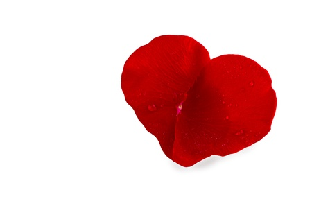 Pair of rose petals in heart shape with water drops on a white background  Stock Photo - 20427538
