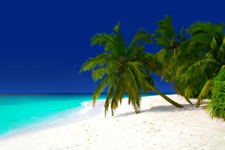 View of idyllic beach with white sand, coconut palms and turquoise water at Maldives, Baa Atoll