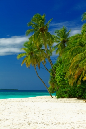 Perfect beautiful beach on Maldives - with white sand, turquoise water, green coconut palms and blue sky with white clouds.