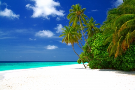 Perfect beautiful beach on Maldives - with white sand, turquoise water, green coconut palms and blue sky with white clouds