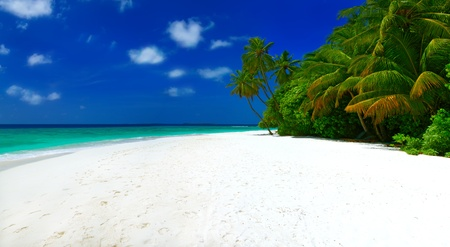 palmtree: Panorama of beautiful tropical beach with white sand, palm trees, blue sky and white clouds on Maldives