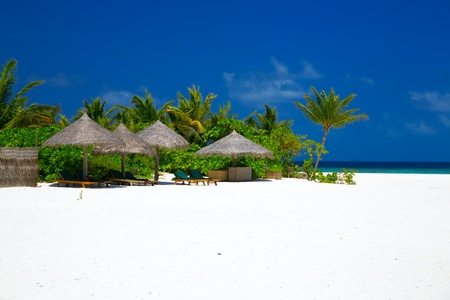 View of perfect beach with white sand, coconut palm tree, blue sky and sun loungers on Maldives