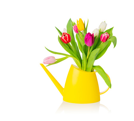 Group of colorful tulips in yellow water pot over white background, isolated, with copy space. Easter greeting card.  photo