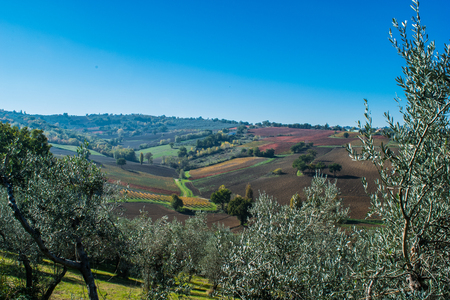 bevagna: Olive trees and vineyard in the Italian country