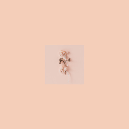 12b964f79 Stock Photo - Tiny dry flowers on peach color background. Picture for  interior design. Minimalism and minimalist art. Concept of minimalism.
