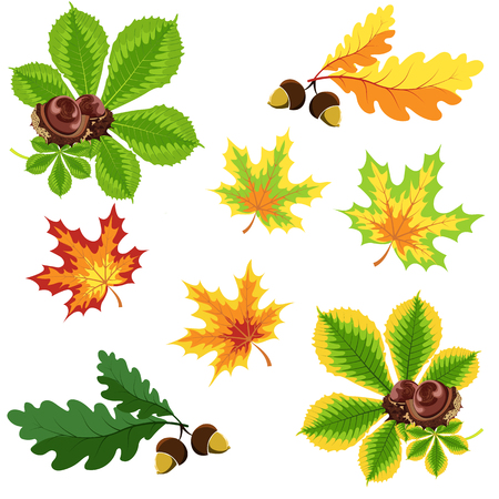 Set of autumn leaves and nuts on a white background