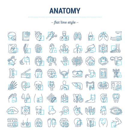 Conjunto de gráficos vectoriales. Iconos en diseño plano, de contorno, fino, minimalista y lineal. Ciencia de la anatomía. Estudio y estructura de órganos internos humanos. Ilustración del concepto de sitio web. Signo, símbolo, elemento.