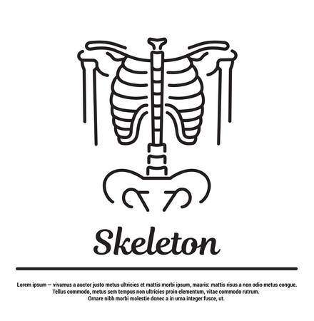 Vector graphic silhouette of the human skeleton. Concept for the web site, app, online page. Human bones in a flat, linear, contour, thin design. Infographic, template, and pictogram. Illustration