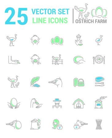 Vector graphic set. Silhouette, logo, icon. Ostrich farm, ostrich eggs. Linear, flat, contour, thin design. App, Web site template, infographic.