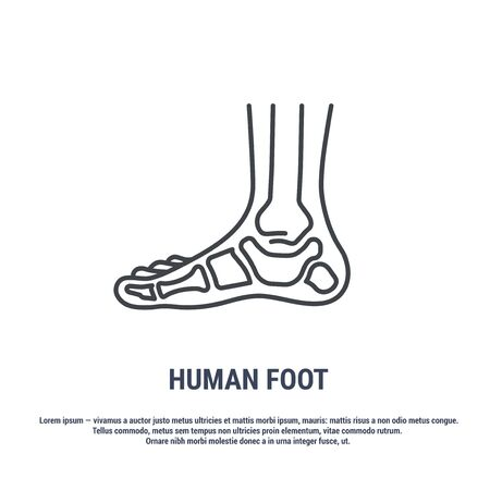 Vector icon. Line design. Human foot. Bones and structure. Medicine and anatomy. Anatomical structure of man. Symbol, element, sign, emblem. Concept illustration. Illustration