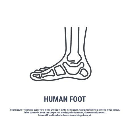 Vector icon. Line design. Human foot. Bones and structure. Medicine and anatomy. Anatomical structure of man. Symbol, element, sign, emblem. Concept illustration. 矢量图像
