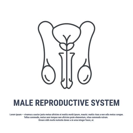 Vector icon. Line design. Male reproductive system. Medicine and anatomy. Anatomical structure of man. Symbol, element, sign, emblem. Concept illustration.