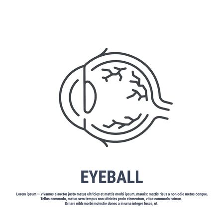 Vector icon. Line design. Eyeball, structure. Anatomical structure of man. Disease and treatment. Symbol, element, sign, emblem. Concept illustration.