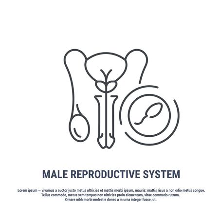 Vector icon. Line design. Male reproductive system. Anatomical structure of man. Disease and treatment. Symbol, element, sign, emblem. Concept illustration.