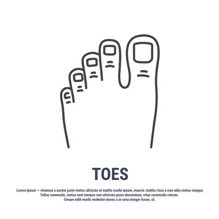 Vector icon. Line design.Toes and foot. Anatomical structure of man. Disease and treatment. Symbol, element, sign, emblem. Concept illustration.