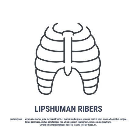 Vector icon. Line design. Rib bones. Anatomical structure of man. Disease and treatment. Symbol, element, sign,  emblem. Concept illustration. Illustration