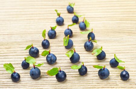 heal new year: Fresh blueberries, located in the form of fir-tree Stock Photo