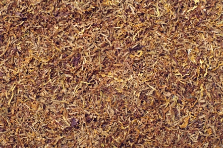 Texture of tobacco for cigarettes photo