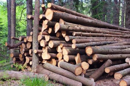 felled: Felled tree trunks, branches peeled