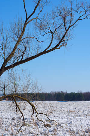 Drifting ice on the river in the spring photo