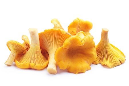 Chanterelles mushrooms on a white background Stok Fotoğraf