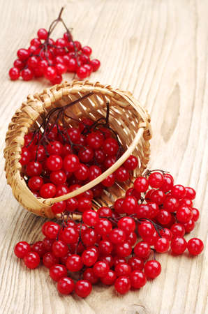 guelder rose: Berries of red viburnum in wicker basket and near on white wooden background