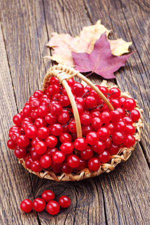 guelder rose berry: Viburnum berry in wicker basket on wooden table  Stock Photo