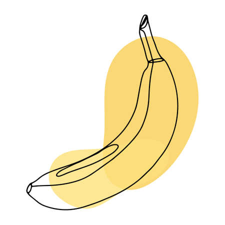 Banana fruit isolated on white background in line art style, doodle. Lines and abstract spots, leaves. Vector illustration drawn by hands in one line.