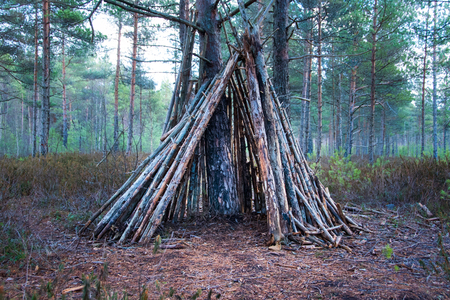 Shelter of branches in the forest