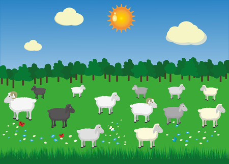 Sheeps and rams in pasture with summer sun Vector