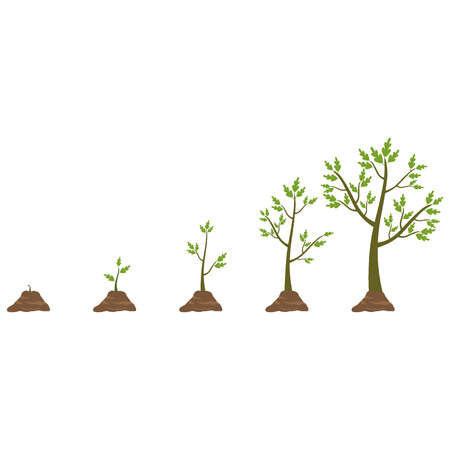 plants growing: Tree life cycle