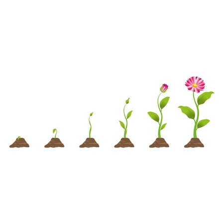 crecimiento planta: Planta creciente en proceso Vectores