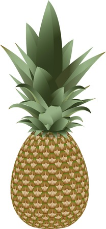 Pineapple isolated vector fruit