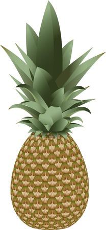 haulm: Pineapple isolated vector fruit