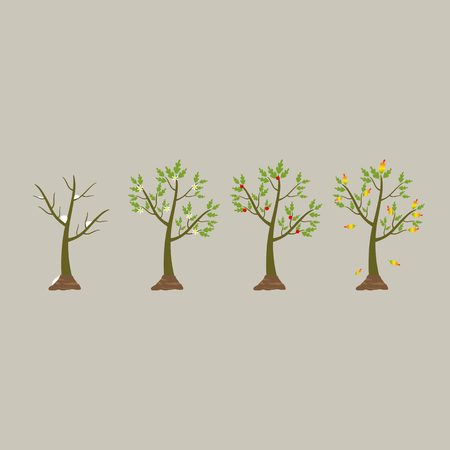 winter tree: Tree in four seasons - spring, summer, autumn, winter