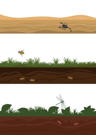grounds: Seamless grounds with insects: jungle, forest, desert Illustration
