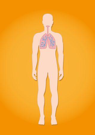 nasal cavity: Human respiratory system anatomy Illustration