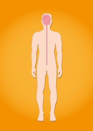 The nervous system of human Illustration