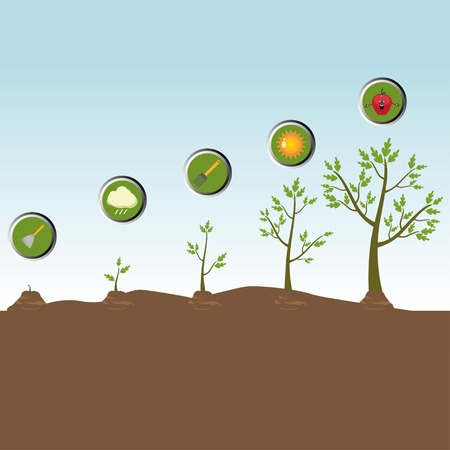 growing plant: Tree life cycle: growing plant