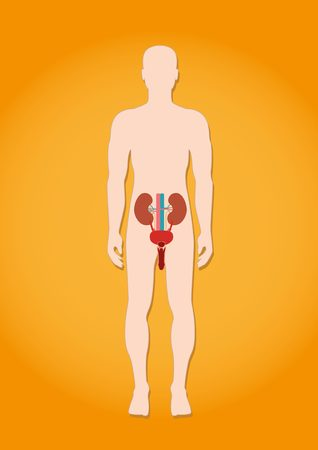 The human excretory system on the man silhouette Illustration