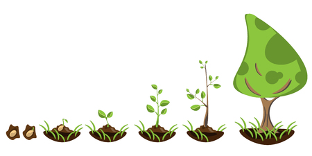 Seedling gardening plant. Seeds sprout in ground.