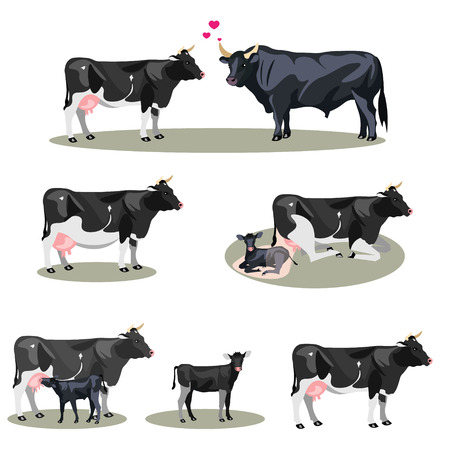 Cow Life with all stages including birth Фото со стока - 93450414