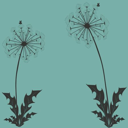 Background with dandelions on a turquoise background. Çizim
